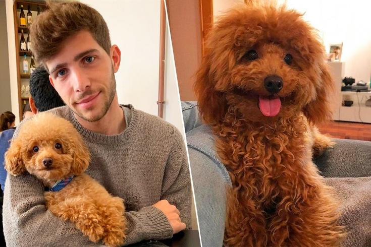 Пёс игрока «Барселоны» Серхи Роберто