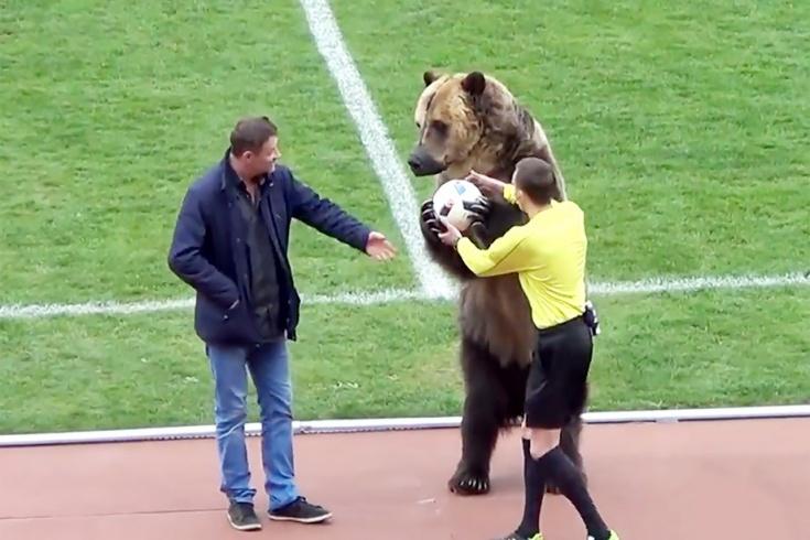 На поле в Пятигорске оказался медведь. Почему?